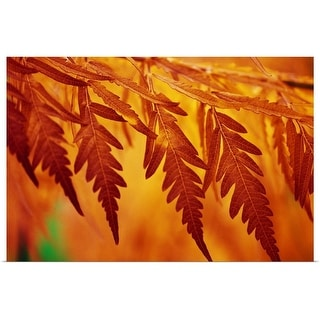 """""""Autumn color leaves, close up, Oregon, united states, """" Poster Print"""