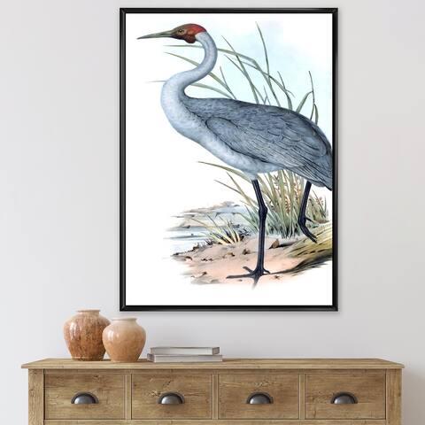 Designart 'Vintage Australian Birds V' Traditional Framed Canvas Wall Art Print