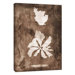 """PTM Images 9-105809  PTM Canvas Collection 10"""" x 8"""" - """"Natural Forms Sepia 9"""" Giclee Seaweed Art Print on Canvas"""