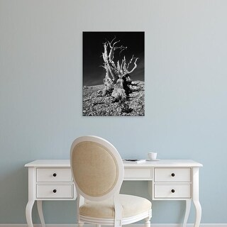 Easy Art Prints Jerry Ginsberg's 'White Mountains In Inyo National Forest' Premium Canvas Art