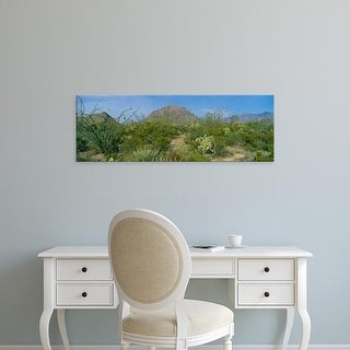 Easy Art Prints Panoramic Images's 'Ocotillo Plants In A Park, Big Bend National Park, Texas, USA' Premium Canvas Art