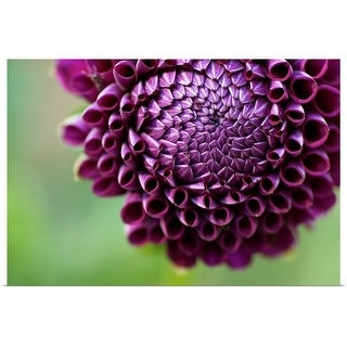 """Purple Dalia flower."" Poster Print"
