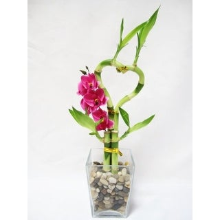 9GreenBox - Lucky 'Bamboo' - Heart Style w/ Silk Orchid
