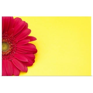 """""""Pink gerbera daisy on yellow background."""" Poster Print"""