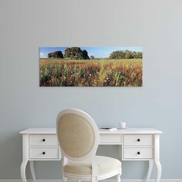 Easy Art Prints Panoramic Images's 'Wild flowers in a field, Andalucia, Spain' Premium Canvas Art