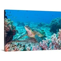 Premium Thick-Wrap Canvas entitled Green turtle at Balicasag, Bohol, Philippines. - Multi-color