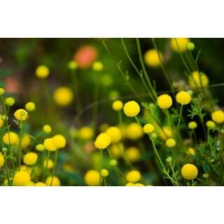 Australian Yellow Plants Photograph Wall Art Canvas