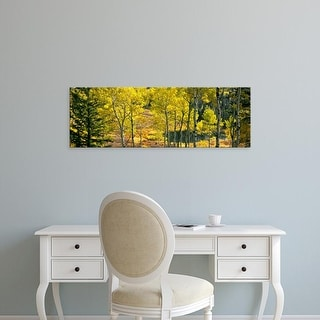 Easy Art Prints Panoramic Images's 'Aspen grove, Moose Ponds, Grand Teton National Park, Wyoming, USA' Canvas Art