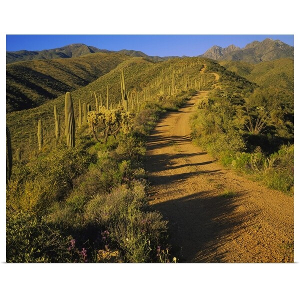 """Dirt road leading to a mountain, Tonto National Forest, Maricopa County, Arizona"" Poster Print"