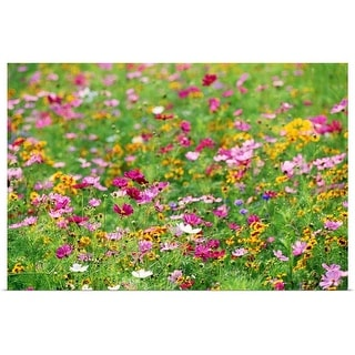 """Wildflowers in meadow"" Poster Print"