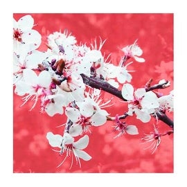 ''Blossom in Pink'' by Gail McKenzie Kunst Graphics Art Print (19.75 x 19.75 in.)