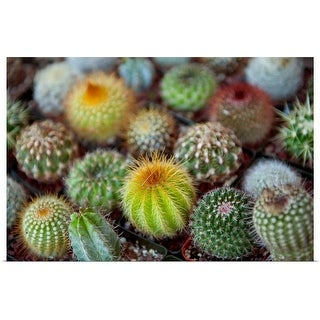 """""""Close-up of multi-colored Cacti"""" Poster Print"""