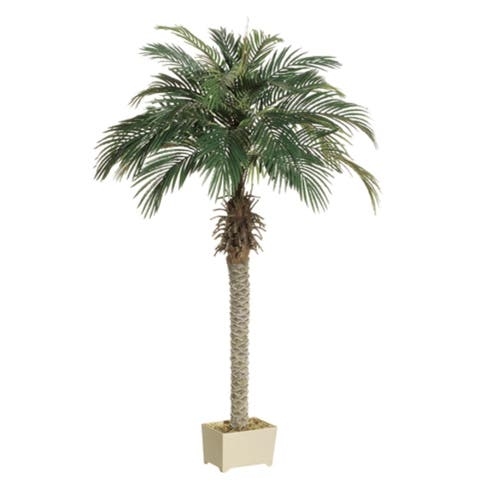 Set of 2 Potted Artificial Silk Phoenix Palm Trees 6' - Green - N/A