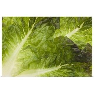 """""""Lettuce"""" Poster Print"""