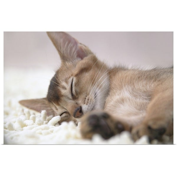"""""""Abyssinian cat sleeping"""" Poster Print"""