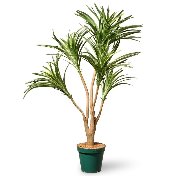 Potted Dracaena Garden Accent Plant – 3 Feet - N/A