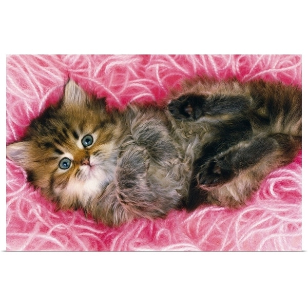 """""""Persian Cat Lying on Bunch of Pink-colored Wool, Looking at Camera, High Angle View"""" Poster Print"""