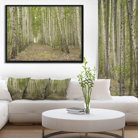 Designart 'Dense Birch Grove in Summer Day' Forest Framed Canvas Art Print