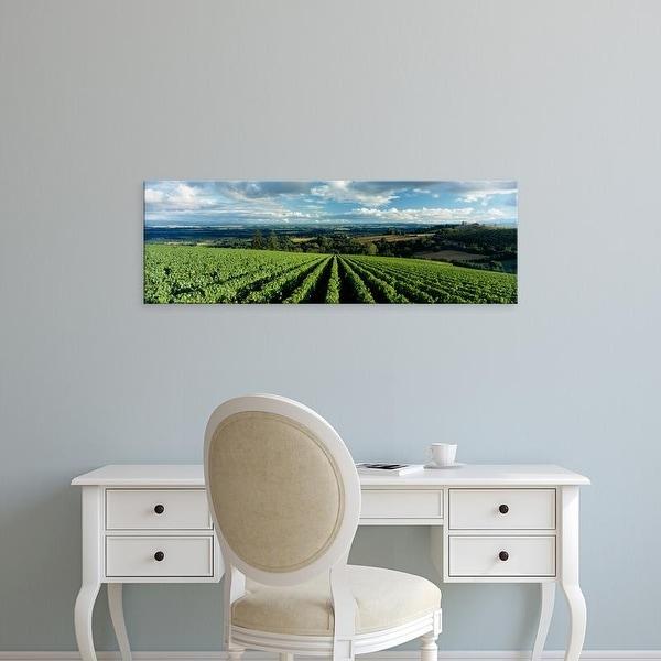 Easy Art Prints Panoramic Images's 'Vineyards, Domaine Drouhin Oregon, Newberg, Willamette Valley, Oregon' Canvas Art