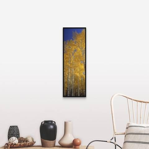 """""""Golden Aspens Standing Tall Flagstaff AZ"""" Black Float Frame Canvas Art"""