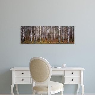 Easy Art Prints Panoramic Images's 'Silver birch trees in a forest, Narke, Sweden' Premium Canvas Art