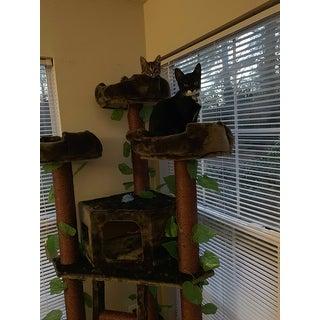 Redwood 75-inch Dark Brown Cat Tree Furniture