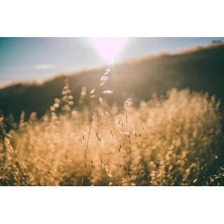 Light And Grass Photograph Art Print