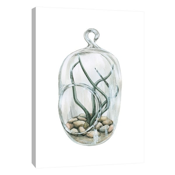 """PTM Images 9-105441 PTM Canvas Collection 10"""" x 8"""" - """"Air Plant 1"""" Giclee Botanical Art Print on Canvas"""