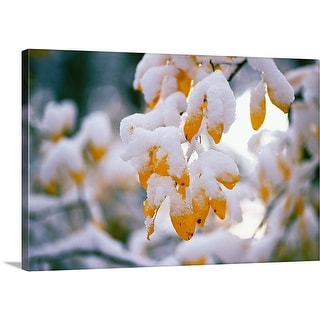 Premium Thick-Wrap Canvas entitled Snow On Autumn Color Leaves
