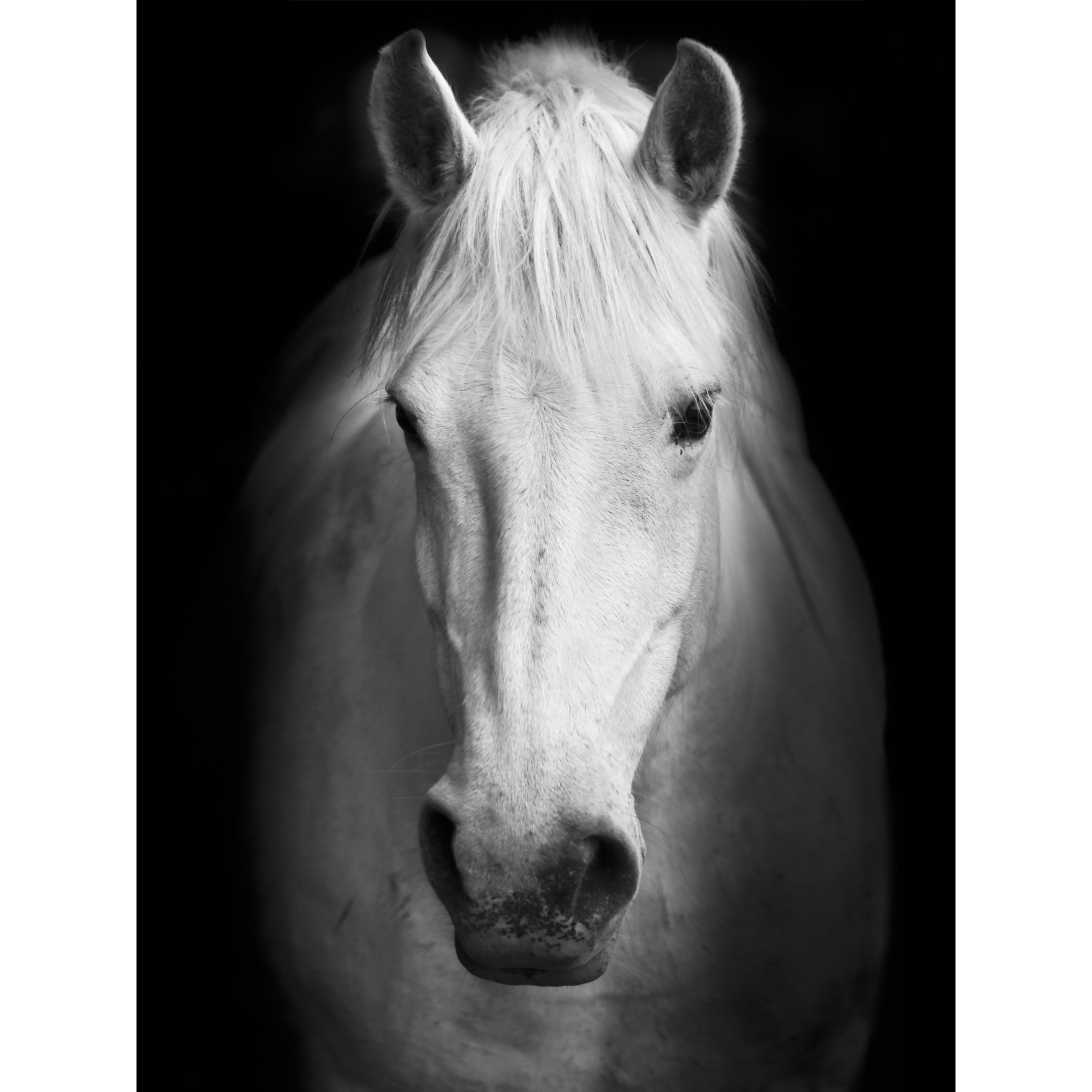 White Horse Face Photography Canvas Art Overstock 30218344
