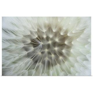 """Dandelion seeds"" Poster Print"