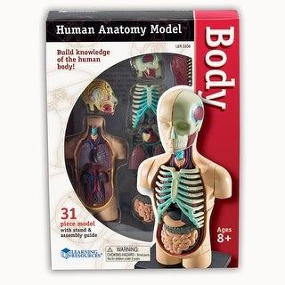 Model Human Body Anatomy