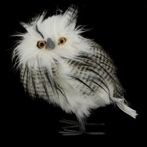 White Owl with Black Feathers