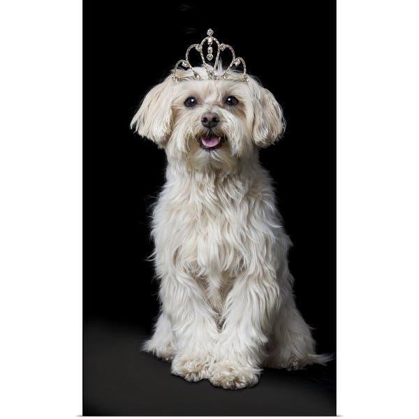 Shop Maltese Poodle Dog Wearing Tiara Multi Free
