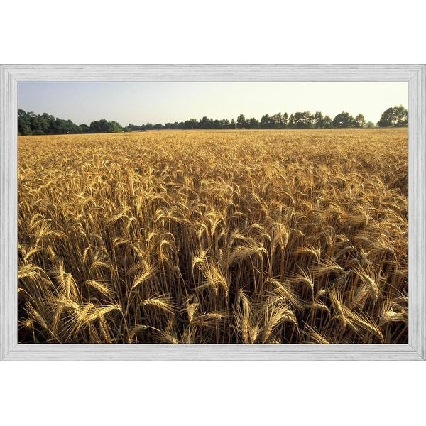 CANVAS Sky over Wheat Fields Art print POSTER