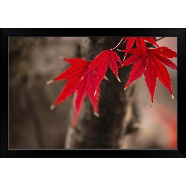"""""""Maple tree"""" Black Framed Print"""