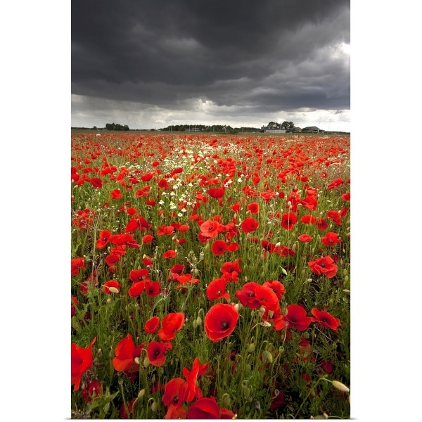 """""""Poppy field with stormy sky in background."""" Poster Print"""