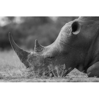 African Rhino Photograph Wall Art Canvas