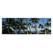 Poster Print entitled Palm trees on the beach, Hawaii