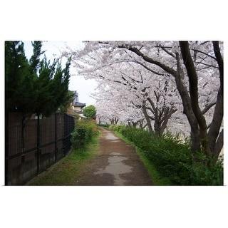 """Cherry Blossoms"" Poster Print"