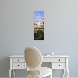 Easy Art Prints Panoramic Images's 'Almond trees in an orchard, Central Valley, California, USA' Premium Canvas Art