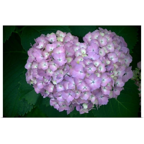 """Hydrangea purple flower in heart shape."" Poster Print"