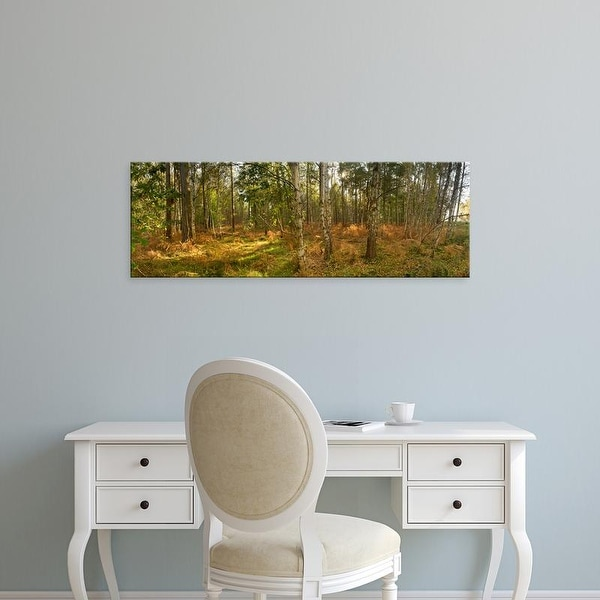 Easy Art Prints Panoramic Images's 'Silver Birch trees in early autumn, Thetford Forest, Norfolk, England' Canvas Art