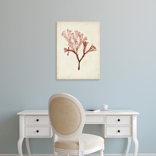 Easy Art Prints Naomi McCavitt's 'Seaweed Specimens V' Premium Canvas Art
