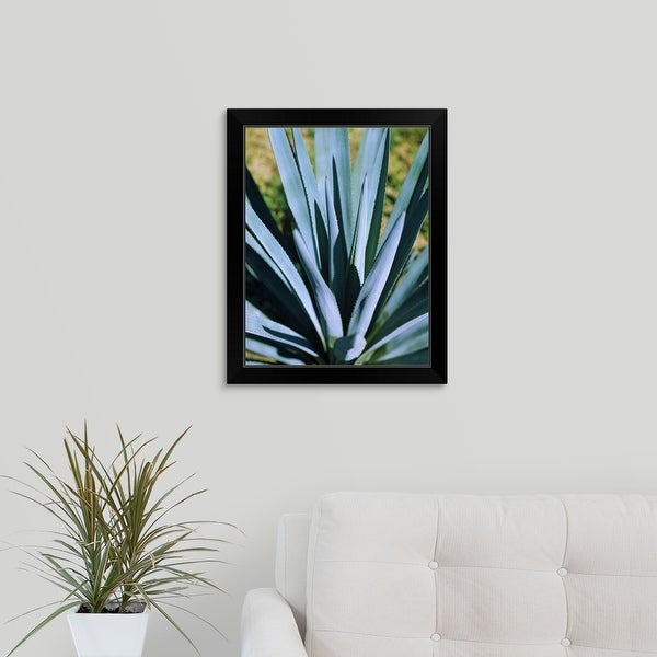 """""""Close-up of a Blue agave (Agave Tequilana) plant, Mexico"""" Black Framed Print"""