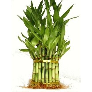 "9GreenBox - Lucky 'Bamboo' 3 Tier 4"" 6"" 8"" for Feng Shui"