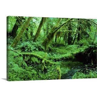 """USA, Washington, Olympic National Park, Hoh Rain Forest"" Canvas Wall Art"