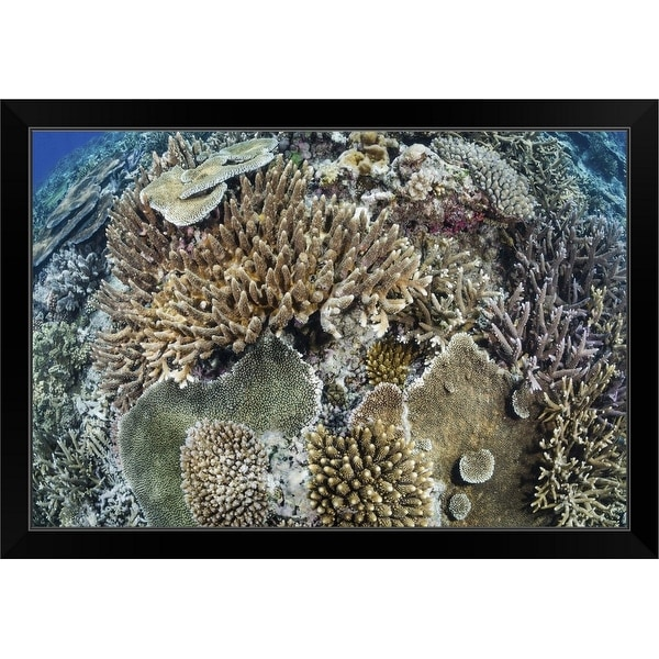 """Coral reef, Fiji"" Black Framed Print"