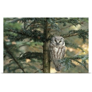 Poster Print entitled  Owl in Tree
