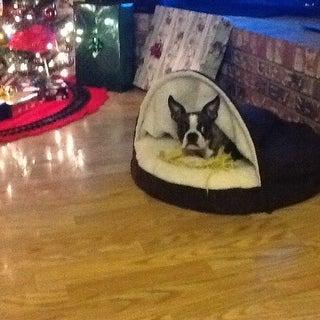 FurHaven Faux Sheepskin Snuggery Burrow Orthopedic Dog Bed